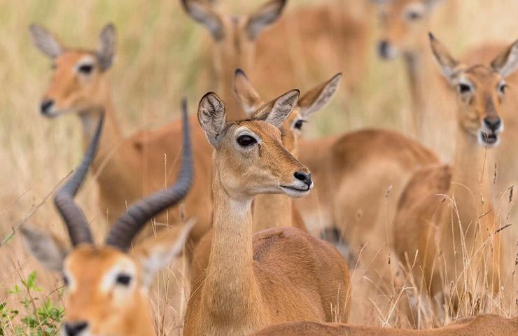 9days-uganda-safaris