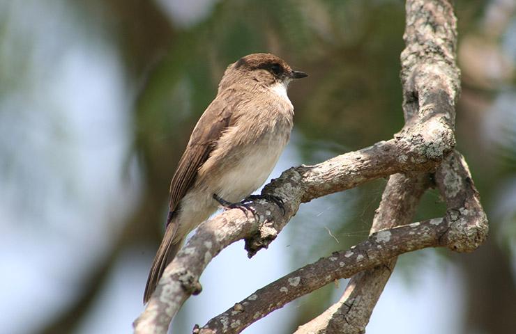 uganda-birding