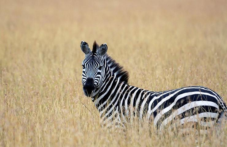 masai-mara-safaris