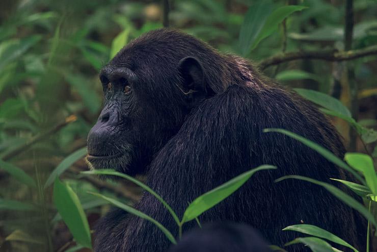 Uganda-Rwanda-Tours